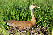 BRD 16 LS0005 01