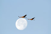 BRD 16 LS0007 01