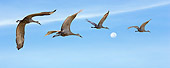 BRD 16 MB0001 01