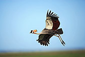 BRD 16 MH0003 01
