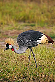 BRD 16 MH0006 01