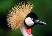 BRD 16 MH0008 01