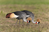 BRD 16 MH0009 01