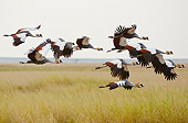 BRD 16 NE0004 01