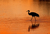 BRD 16 RW0002 01