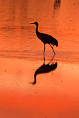BRD 16 RW0004 01