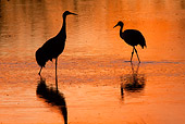 BRD 16 RW0005 01