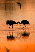 BRD 16 RW0006 01
