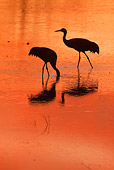 BRD 16 RW0007 01