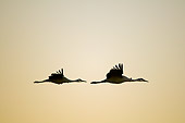 BRD 16 SK0003 01