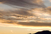 BRD 16 SK0005 01