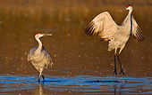 BRD 16 WF0001 01