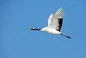 BRD 16 WF0002 01