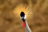 BRD 16 JZ0001 01