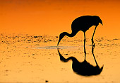 BRD 16 LS0001 01