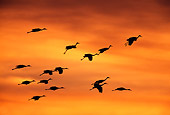 BRD 16 RF0001 01