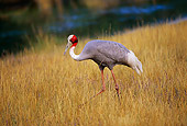 BRD 16 RK0001 02
