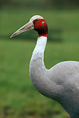 BRD 16 RK0003 01