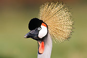 BRD 16 TK0001 01