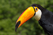 BRD 17 LS0001 01