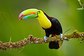 BRD 17 MC0001 01