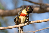 BRD 17 MC0002 01
