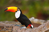 BRD 17 MC0003 01