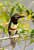 BRD 17 MC0004 01