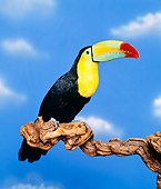 BRD 17 RK0005 17