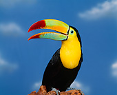BRD 17 RK0005 21