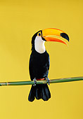 BRD 17 RK0017 10