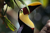 BRD 17 MR0001 01
