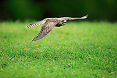 BRD 18 AC0012 01