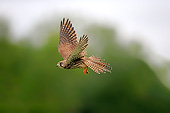 BRD 18 AC0013 01