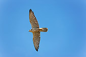 BRD 18 GL0001 01