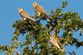 BRD 18 MC0002 01