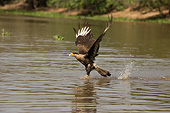 BRD 18 MC0009 01