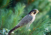 BRD 18 RK0009 03