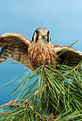 BRD 18 RK0012 08