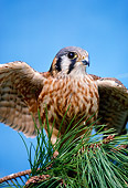 BRD 18 RK0012 18