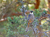 BRD 18 WF0001 01