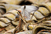 BRD 18 WF0002 01