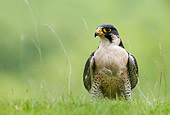 BRD 18 WF0006 01