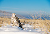 BRD 18 DB0001 01