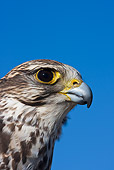 BRD 18 KH0001 01