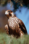 BRD 18 RK0003 07