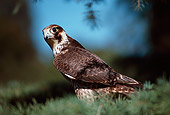 BRD 18 RK0003 12