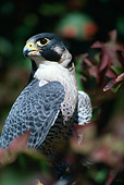 BRD 18 RK0004 02