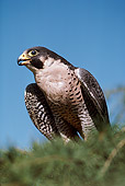 BRD 18 RK0005 78