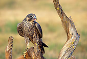 BRD 18 TK0001 01